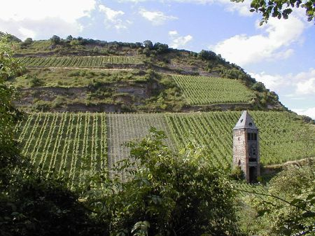 A vinyard on the Rhine River