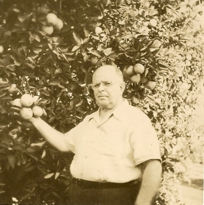 Allan Daniells with his citrus grove.